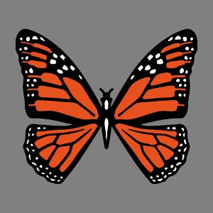 Papillon orange et noir à imprimer en ligne sur t-shirt ou sac. Personnalisez le design et créez un article papillon original.