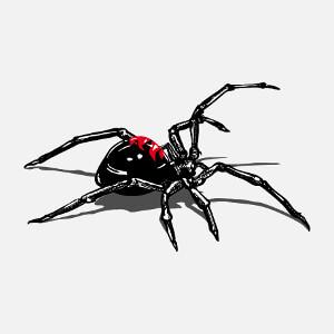 Araignée dessinée de profil. Veuve noire en position d'attaque et ombre portée, illustration HR pour impression sur t-shirt, coque, accessoire.