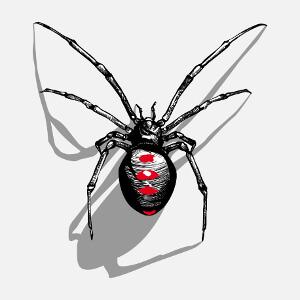 Araignée et ombre portée, illustration en style encre, hachures et aplats.