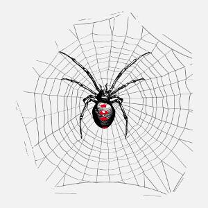 Araignée dans sa toile, dessin de veuve noire HR en png.