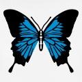Papillon stylisé et coloré décoratif, ailes déployées.